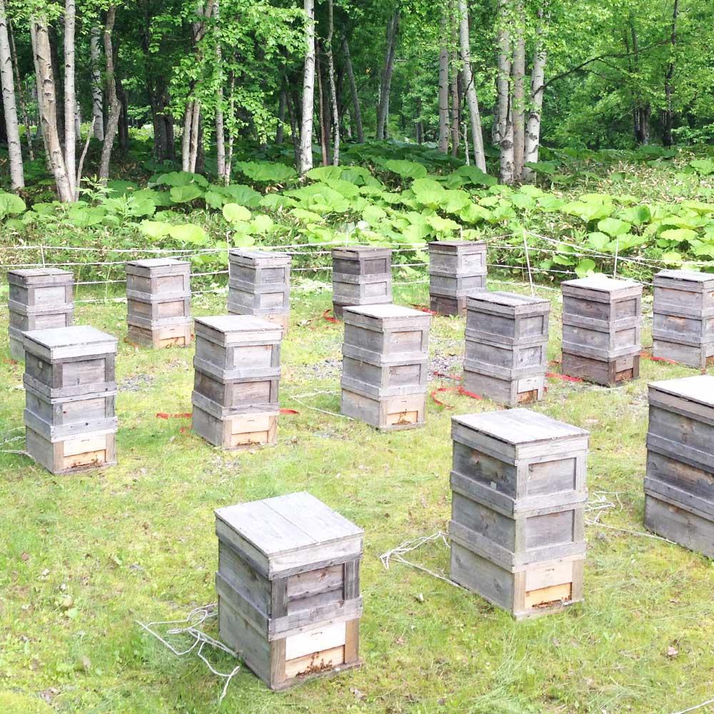 大雪山蜂蜜 種田養蜂場